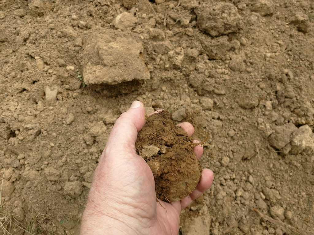 Hand holding clump of good garden loam.